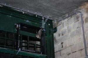 Maak van je BatCounter een cameraval voor vleermuisonderzoek!