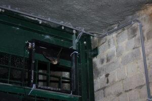 Turn the BatCounter into a camera trap for bat research!